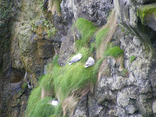 Aves en Irlanda
