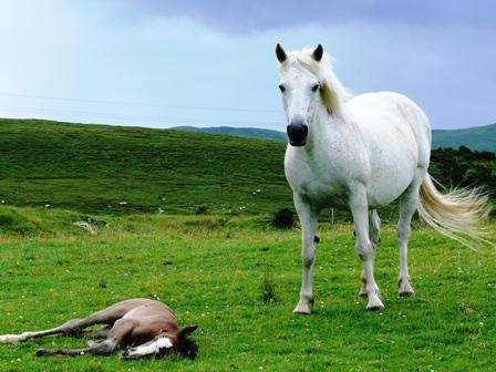 Parque Natural de Connemara