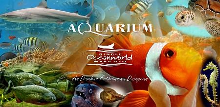 Dingle Oceanworld Aquarium, en Kerry