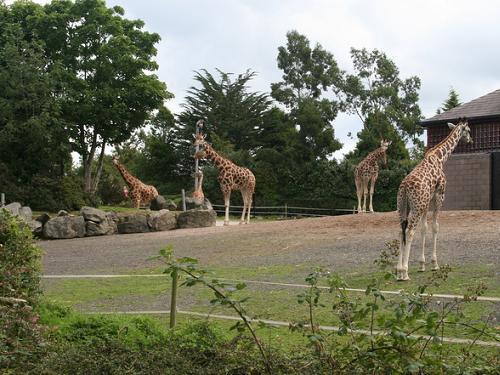 Parques naturales y zoológicos en Irlanda