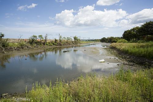 El Booterstown Marsh, un secreto de la naturaleza