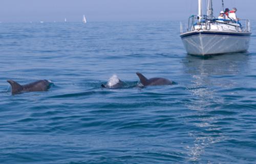 Delfines en Irlanda
