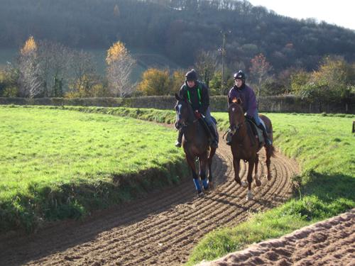 Paseos a caballo en Wexford